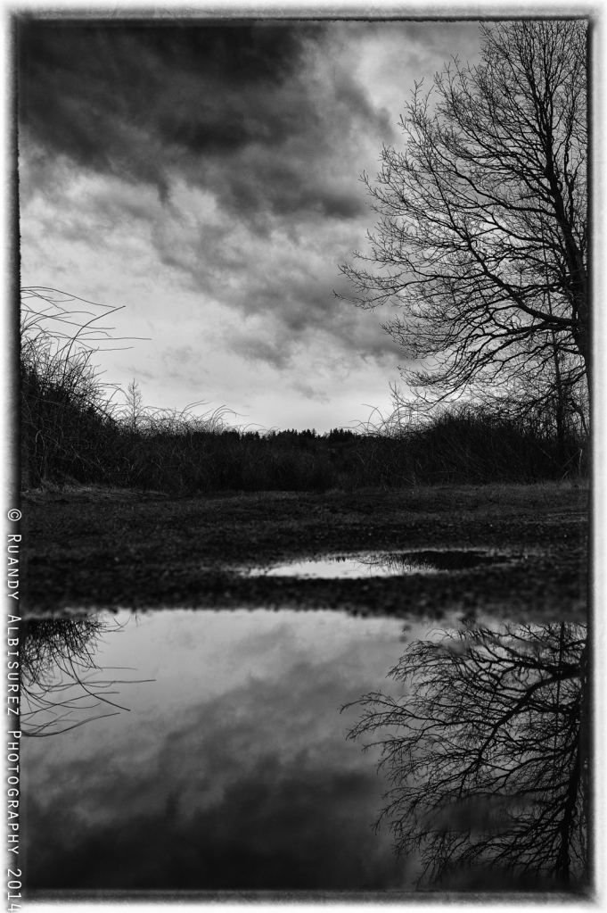 Puddles, Trees & Clouds