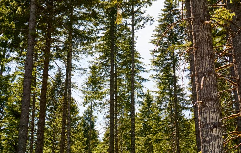 sandyridge_trees